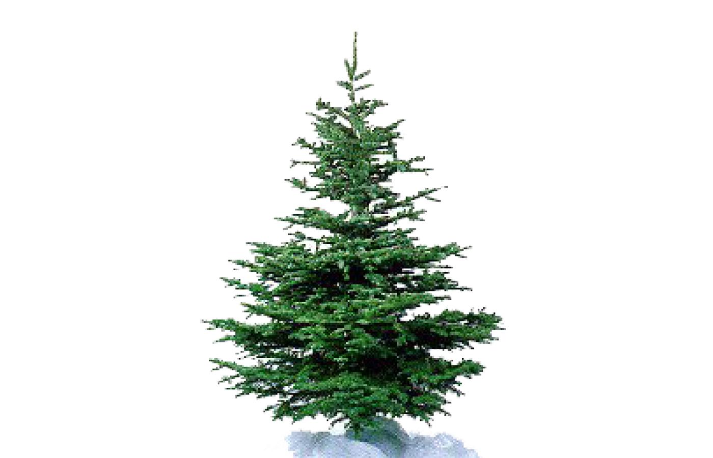 kerstboommidden